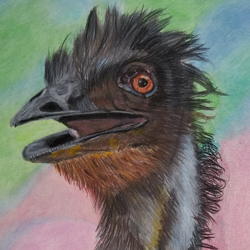 Emus are funny