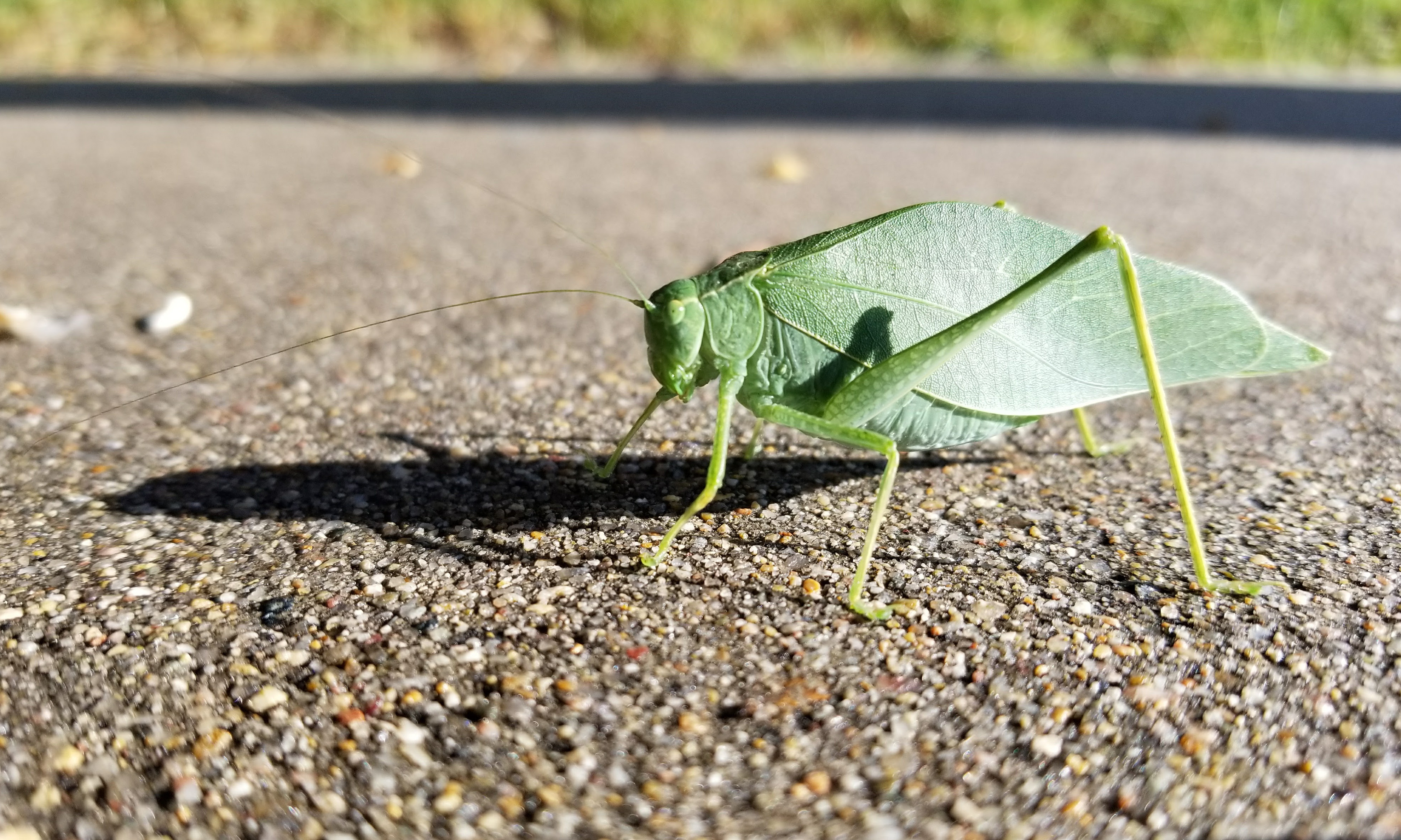 leaf insect photo by gwen nicodemus