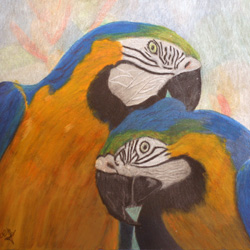 Two macaws in colored pencil