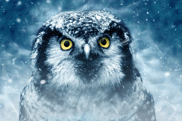 snow owl origginal
