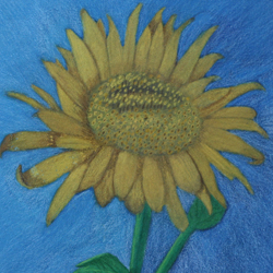 Sunflower, colored pencil on sandpaper