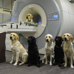 Dogs at the MRI